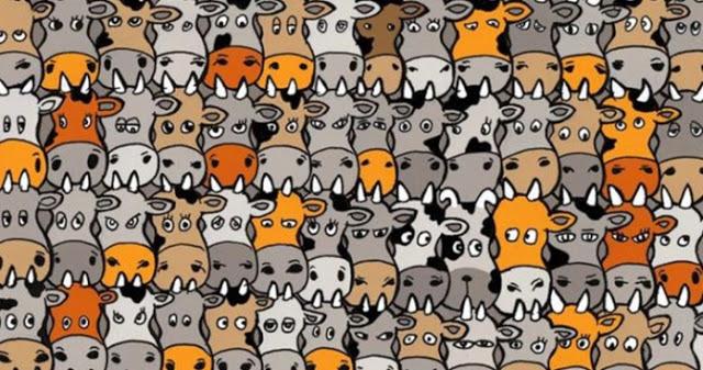 κουίζ με τα κρυμμένα ζώα