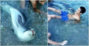 Φώκια μονάχους μονάχους κολυμπά μαζί με οικογένεια στη Σκόπελο και οι εικόνες είναι μαγικές