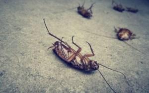 Read more about the article Ποια η φυσική μυρωδιά που δεν αντέχουν με τίποτα οι κατσαρίδες και τα μυρμήγκια!!!