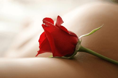 Το λουλούδι που αντιστοιχεί στο μήνα που γεννήθηκες και τι συμβολίζει