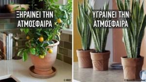 Read more about the article Αυτά τα 10 φυτά αλλάζουν εντελώς τις ατμoσφαιρικές συνθήκες και δημιουργούν το ιδανικό κλίμα για το σπίτι!