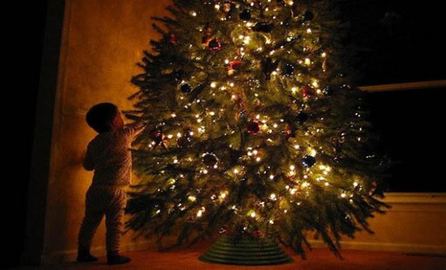 Read more about the article Χριστουγεννιάτικο δέντρο: Αποκαλύφθηκε το λάθος που κάνουμε ΟΛΟΙ στο στολισμό του