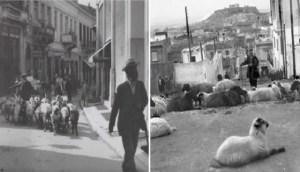 Όταν στο Κολωνάκι έβοσκαν πρόβατα: Η Αθήνα μιας άλλης εποχής