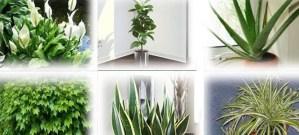 Αυτά τα φυτά είναι βόμβες οξυγόνου -Πάρτε τουλάχιστον ένα σπίτι σας