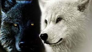 H Παραβολή Των Δυο Λύκων. Μια Σοφή Ινδιάνικη Διδακτική Ιστορία
