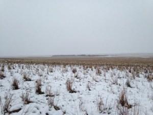 Read more about the article Σε αυτή την φωτογραφία υπάρχουν 500 πρόβατα. Μπορείτε να τα δείτε; (ΤΕΣΤ)