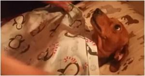 Σκυλίτσα περιμένει να τη σκεπάσουν και να τη φιλήσουν κάθε βράδυ για να κοιμηθεί
