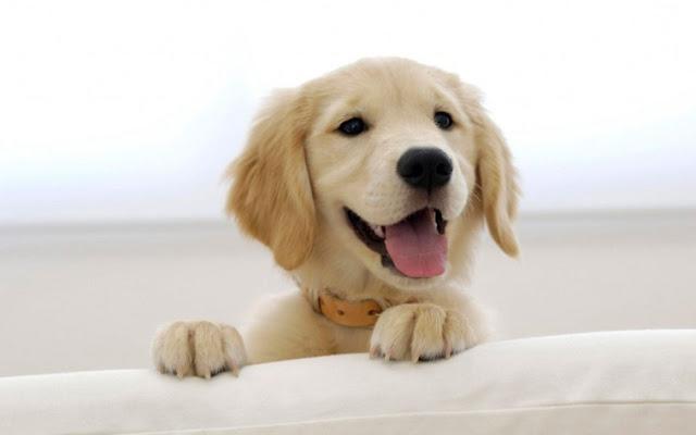 Έξι περιπτώσεις που οι σκύλοι μας διαισθάνονται πολύ πριν από εμάς!