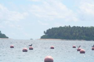 Το νησί της αχρωματοψίας: Εκεί που η ζούγκλα είναι ροζ και ο ωκεανός γκρι