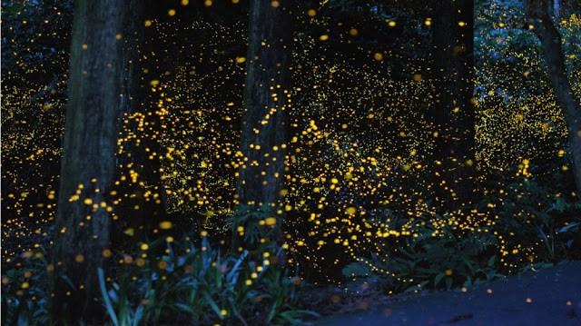 20 τοπία στον κόσμο Πυγολαμπιδες σε δάσος, Ιαπωνία