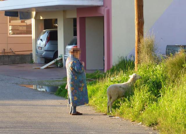 Το περίμενε και να βοσκήσει και συνέχισαν την βόλτα τους