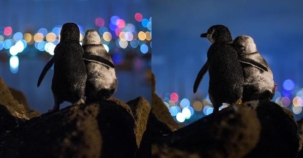 Δύο πιγκουίνοι που έχασαν τα ταίρια τους κοιτούν μαζί τα φώτα της πόλης