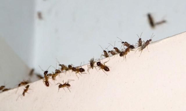 Έντομα στο σπίτι