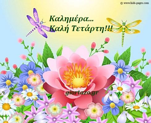 καλημερα λουλουδια πεταλουδα