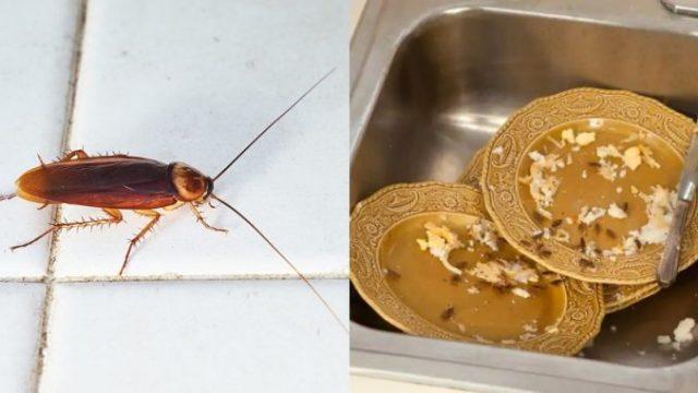 3 λόγοι που γεμίζει με κατσαρίδες η κουζίνα σας