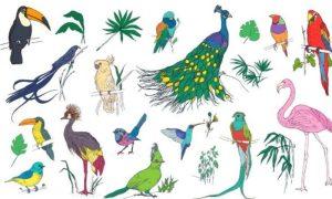Read more about the article Βρες το πτηνό που αντιστοιχεί στο μήνα γέννησής σου