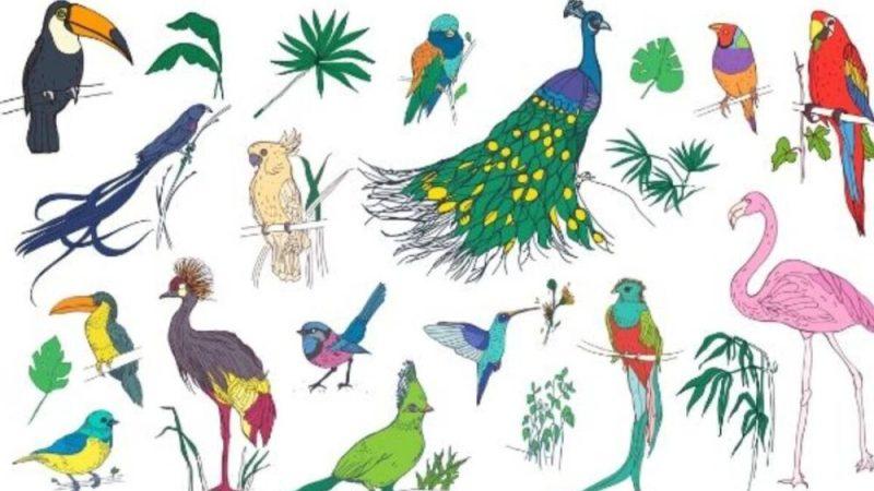 Βρες το πτηνό που αντιστοιχεί στο μήνα γέννησής σου
