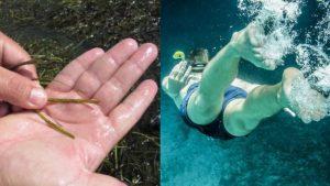 Read more about the article Καθαρή θάλασσα Βρώμικη θάλασσα Πώς θα τη καταλάβουμε