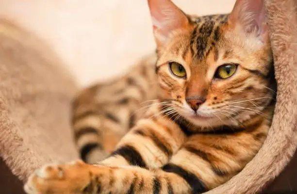 25 τρόποι με τους οποίους οι γάτες δείχνουν την αγάπη τους