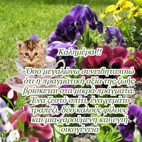 λουλούδια γατούλα
