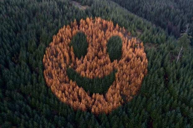 Το δάσος που χαμογελάει κάθε φθινόπωρο