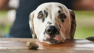 Γιατί Τα Σκυλιά Ζουν Λιγότερο Από Τους Ανθρώπους
