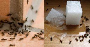 Read more about the article Μυρμήγκια στο σπίτι: 10 τρόποι για να τα εξαφανίσετε και 6 συμβουλές για να τα προλάβετε πριν εμφανιστούν