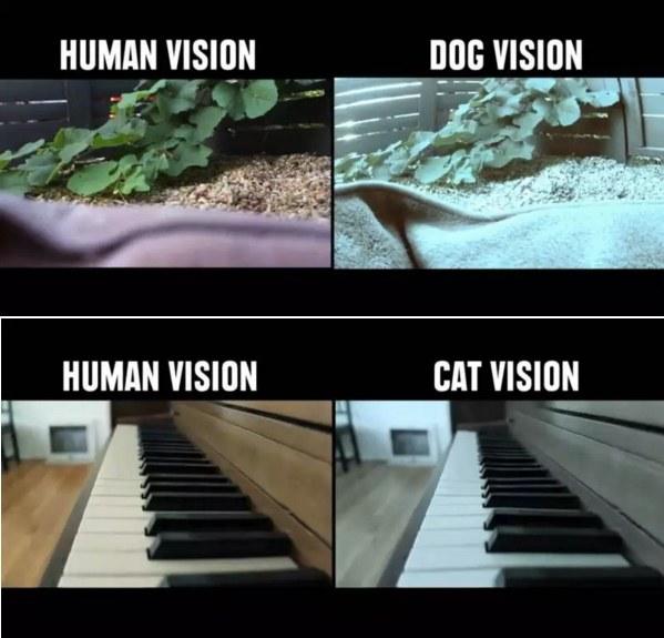 Εδώ βλέπουμε διαφορές στην όραση του ανθρώπου και του σκύλου