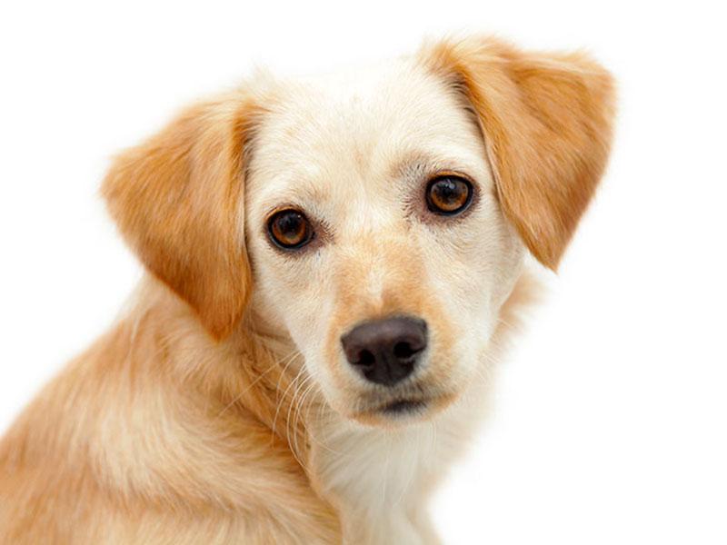 prendere un cane famiglia bambini gg giovaningenitori