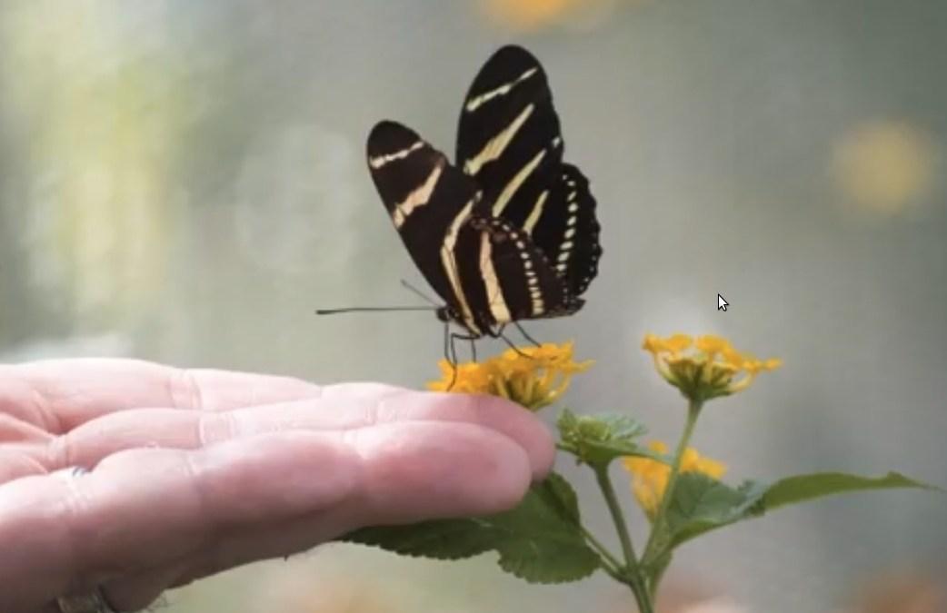 Alla scoperta dello straordinario mondo degli insetti