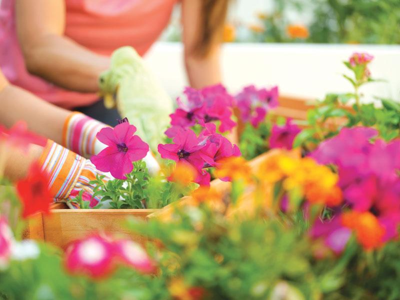 GG come curare il giardino di famiglia