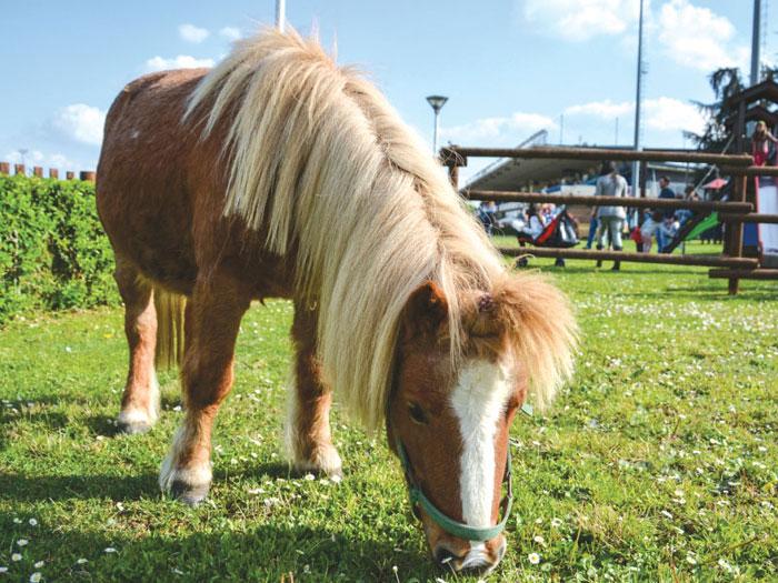 GG cavalli in piemonte2