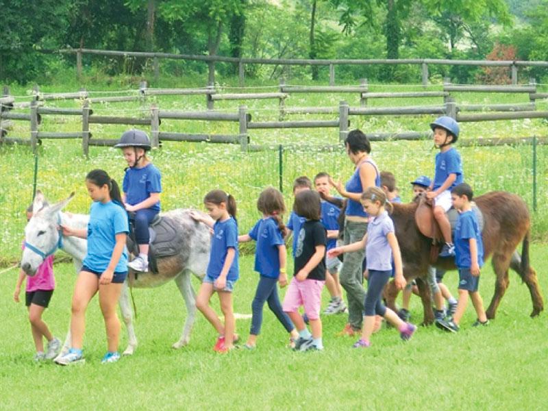 GG cavalli in piemonte6