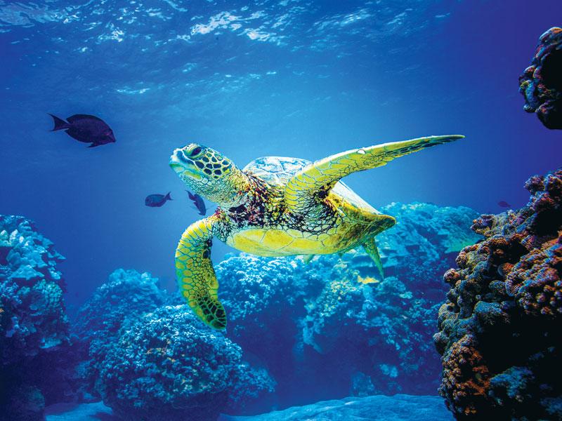 Dove vedere le tartarughe marine