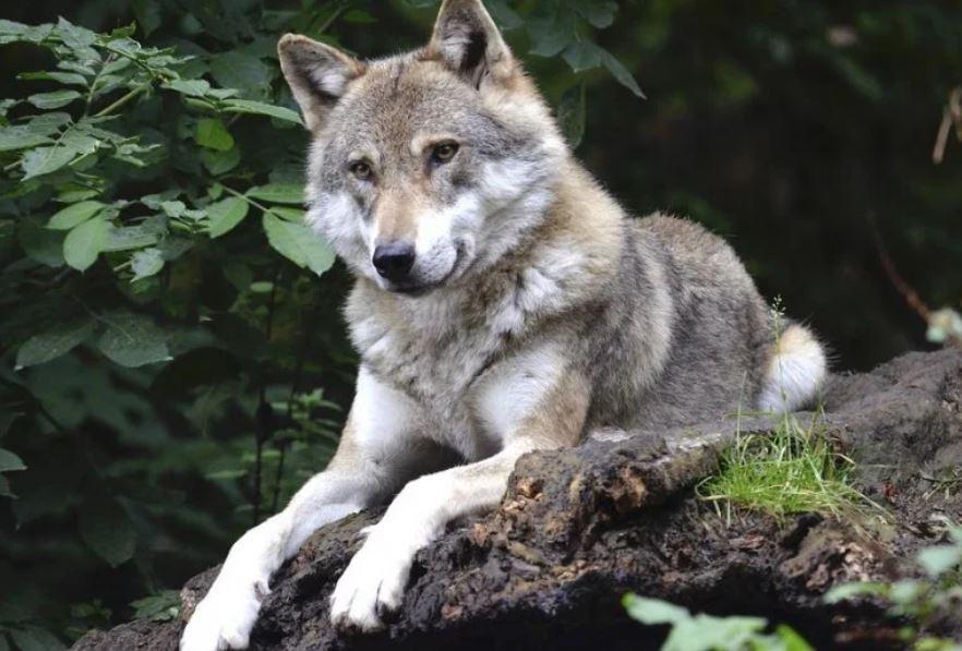Animali selvatici (e dove trovarli)