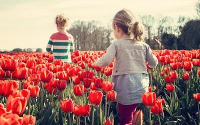 Flower power: le fioriture da vedere dal vivo e online
