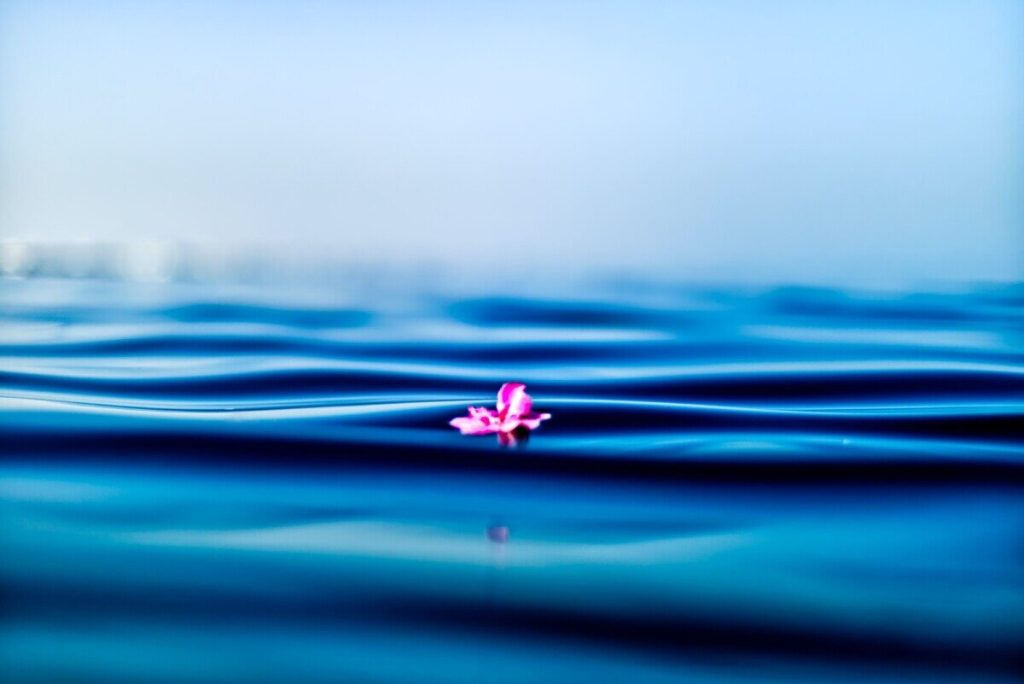 pink petal on body of water