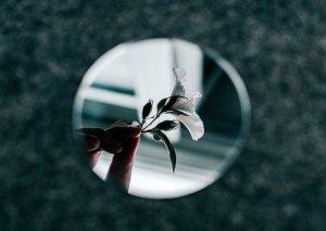 Giglio nello specchio