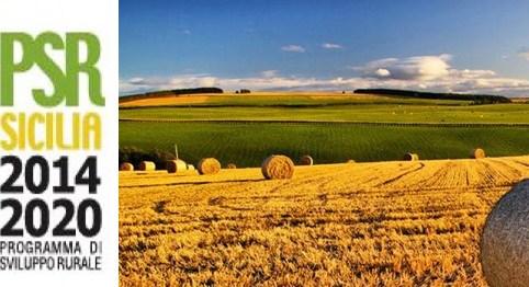 psr sicilia 2014 2020 insediamento giovani agricoltura