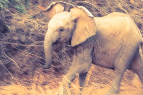 Rennender Baby-Elefant
