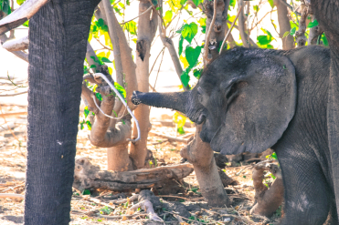 Elefantenbaby.