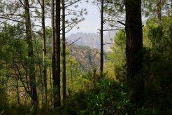 Der Wald gibt immer wieder herrliche Ausblicke frei.