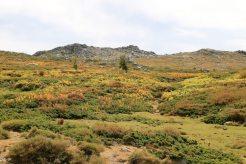 Nach einem Dutzend Haarnadelkurven erreicht man das Plateau de Coscione oberhalb von Quenza gelegen: unser Urlaubshighlight.