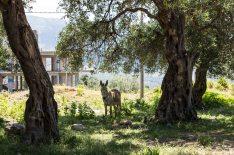 Albanische Impression: Esel mit Rohbau