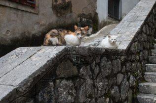 Die Katzen von Kotor, Montenegro
