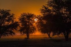 Sonnenaufgang am Leeuwdril Wasserloch, Kgalagadi
