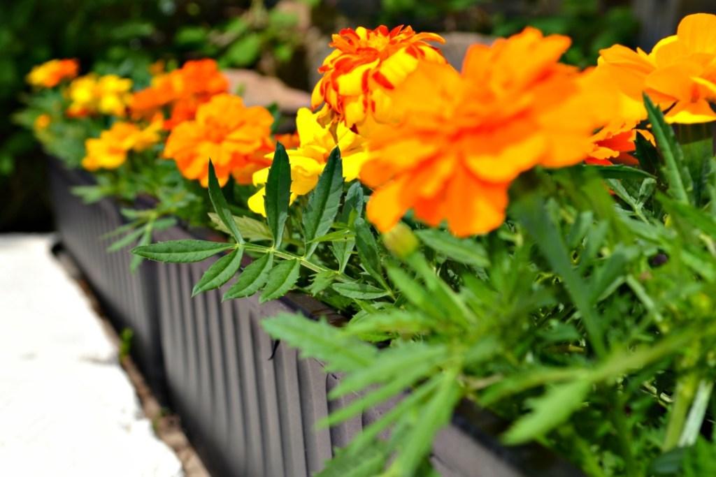 Garden for less - 9 tips for saving money on your garden!
