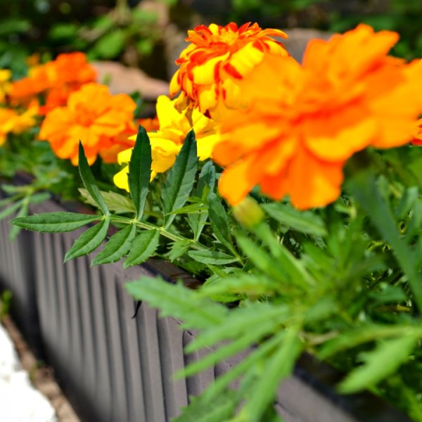 Garden for less - 9 tips for saving money on your garden!