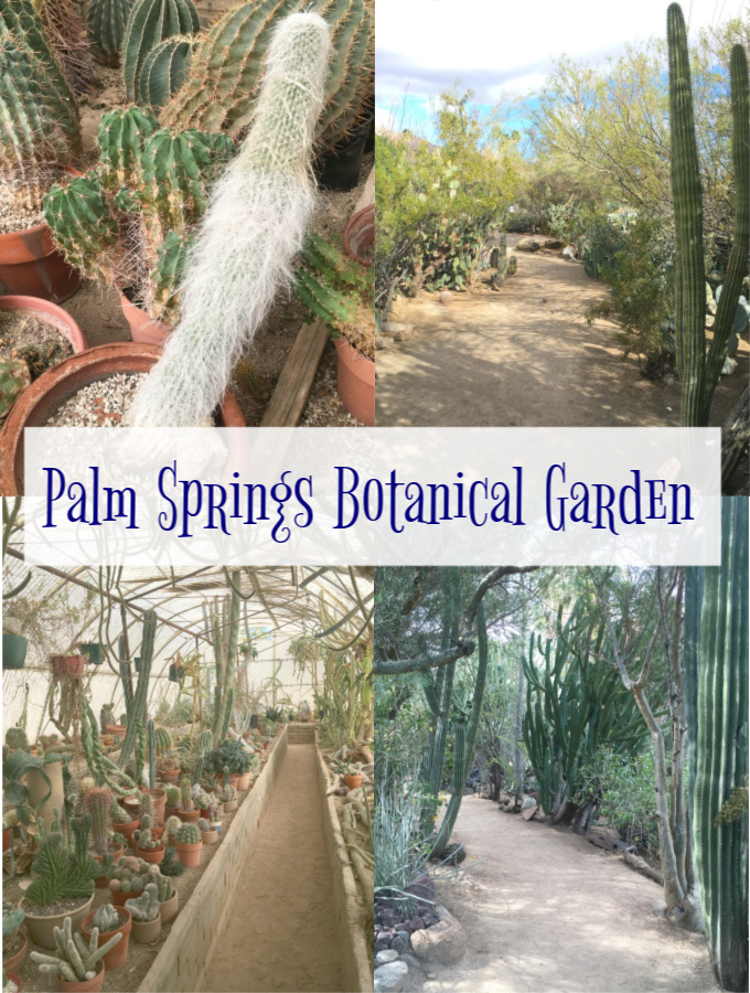 Palm Springs botanical garden, cactus garden palm springs, things to do Palm Springs, palm springs moorten botanical garden, top things to do in palm springs, things to do in palm springs ca, palm springs attractions, things to do in palm springs with kids, palm springs activities, fun things to do in palm springs, best things to do in palm springs