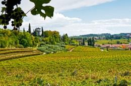 Vineyards of Serego Alighieri